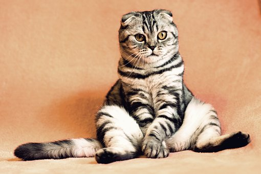 cat-2934720__340.jpg